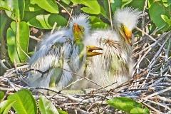 Stork-Chicks